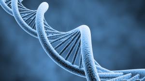 Human-DNA